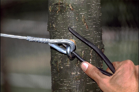 Cabling-Pikes Tree Care