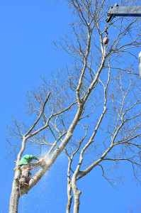 Pikes Tree Care Professional Tree Service